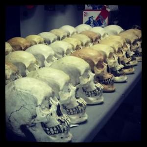 Buy a Skull